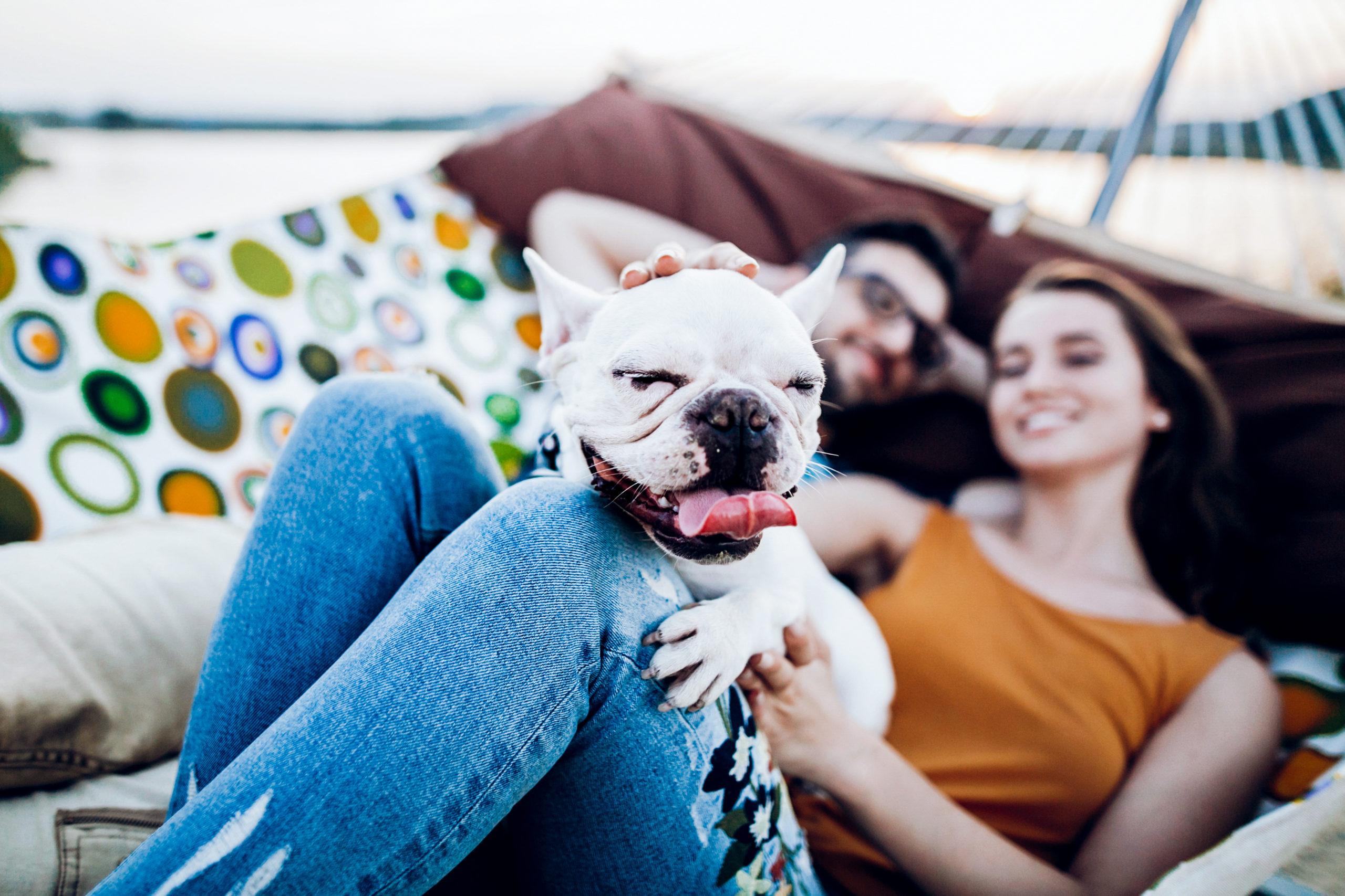 犬と過ごすためのまちドギーズアイランドに学ぶ「まち上場」